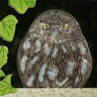 Little Owl 8x8