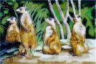 Meerkats 8x12