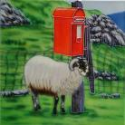 Sheep Shelter 8x8
