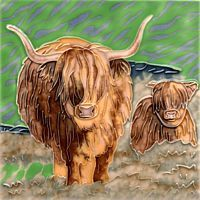 Highland Cows 6x6
