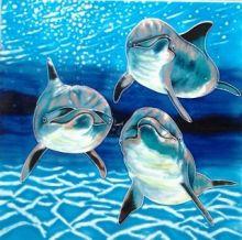 Dolphin Play 8x8