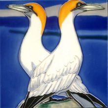 Gannets 8x8