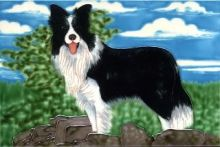 Border Collie 8x12
